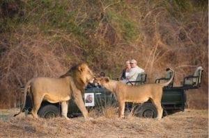 Lion Camp Zambezi