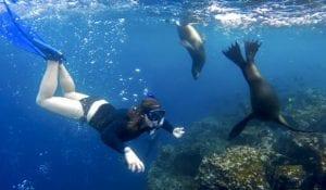 Galapagos Snorkeling With Seals