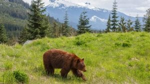 Canadian Wildlife And Vancouver Island