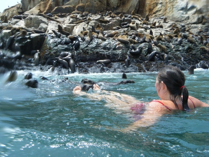 South America Seals