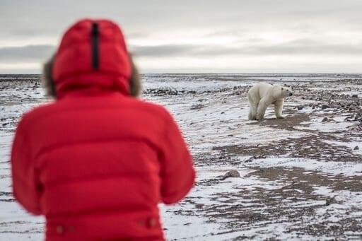 Photographing Polar Bear