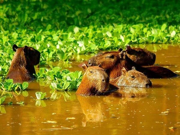 Amazon Rainforest Peru Holiday Escape Sea Animals