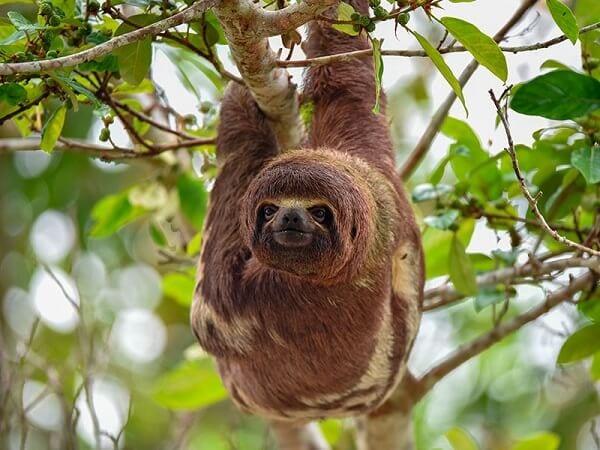 Amazon Rainforest Peru Holiday Escape Sloth