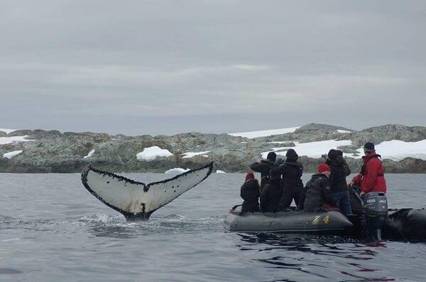 Antarctica Adventure Zodiac