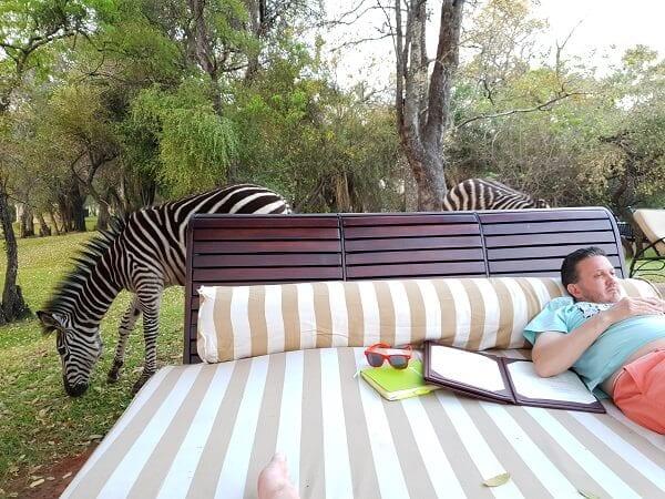 Zambia Relax With Zebras