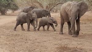 Family Safari Elephant Family