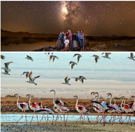 Israel Birds Desert