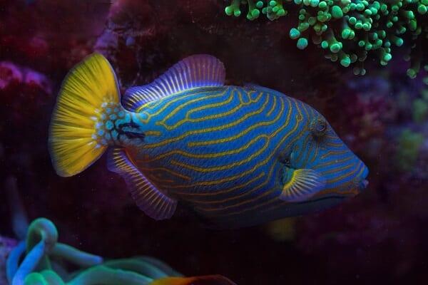 Israel Marine Life