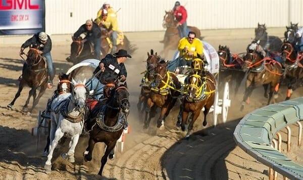 Calgary Stampede Wagon Racing